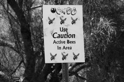 """WTF is an """"active bees"""" area? Is this an AZ thing?"""
